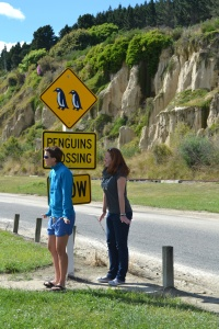 Penguin crossing in Oamaru